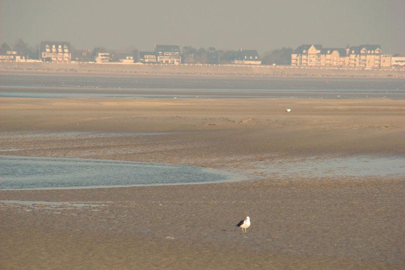 Baie de somme et le crotoy,Picardie