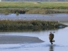 Chasseur dans la Baie de Somme