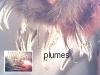 a-plumes.jpg